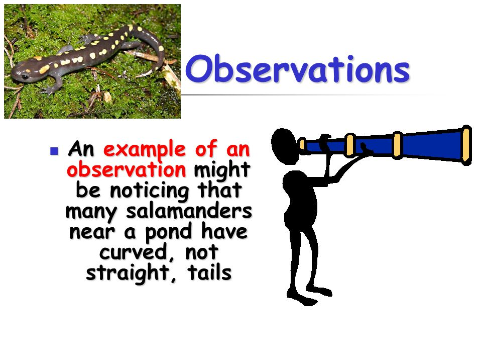 Observations An example of an observation might be noticing that many salamanders near a pond have curved, not straight, tails.