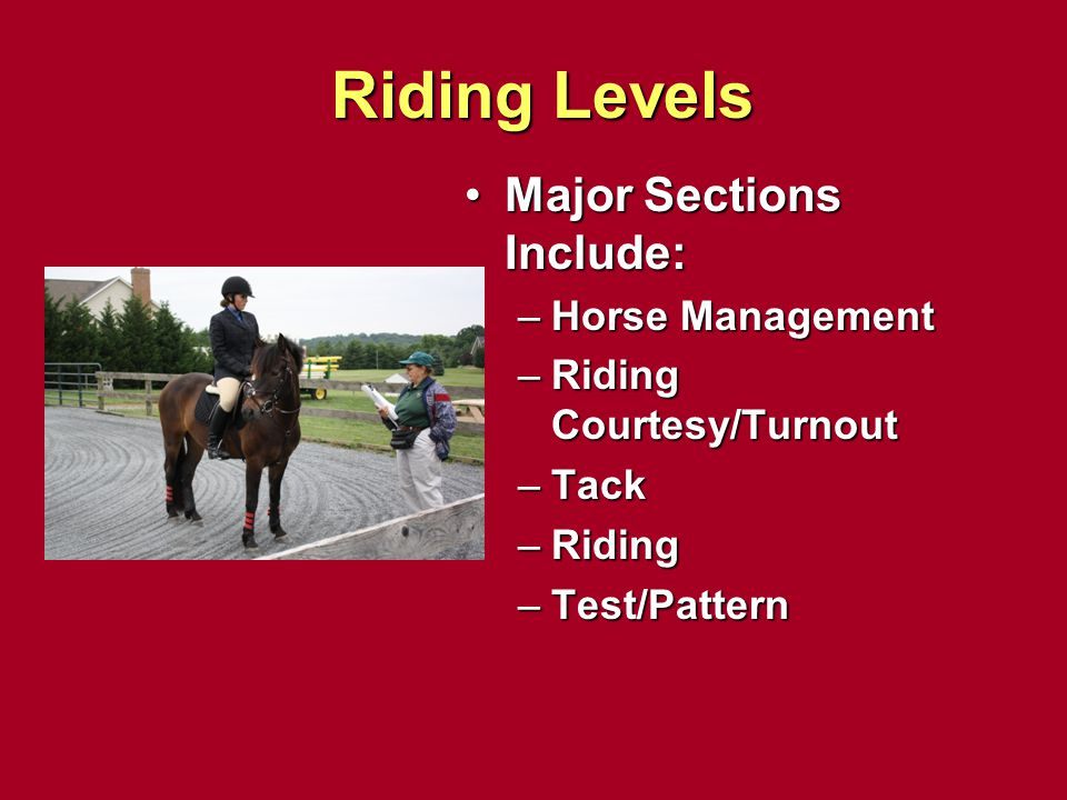 Riding Levels Major Sections Include: Horse Management