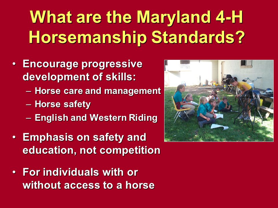 What are the Maryland 4-H Horsemanship Standards