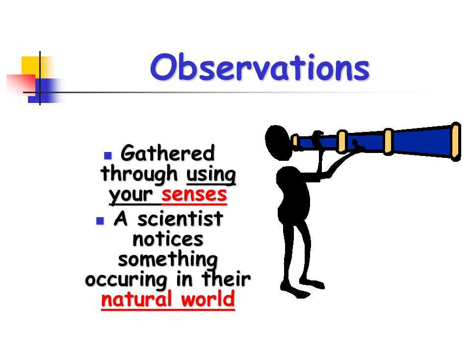 Observations Gathered through using your senses