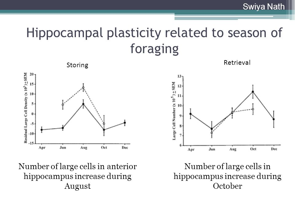 Hippocampal plasticity related to season of foraging