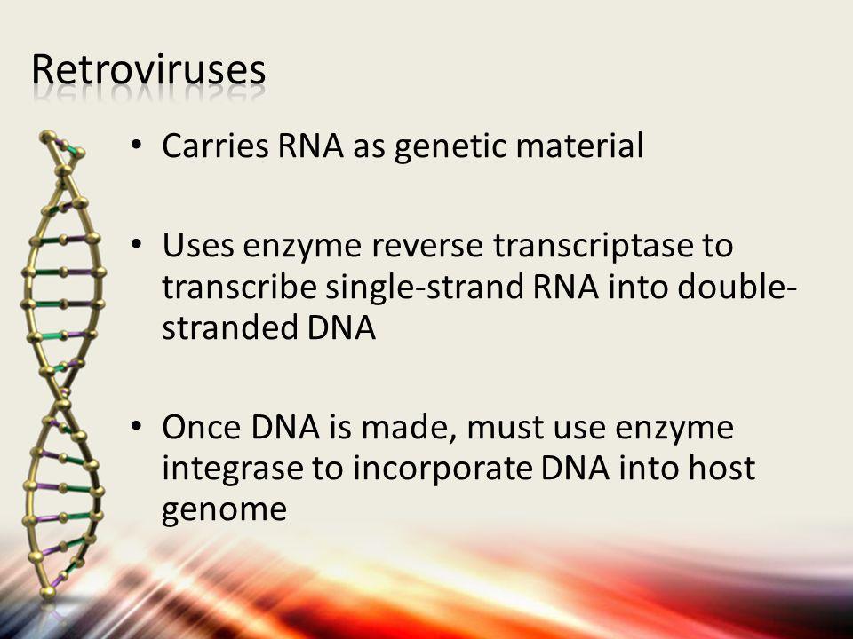 Retroviruses Carries RNA as genetic material
