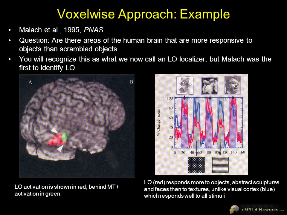 Voxelwise Approach: Example