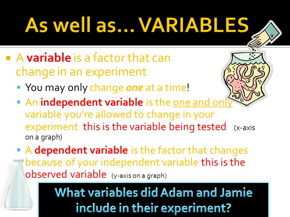 What variables did Adam and Jamie include in their experiment