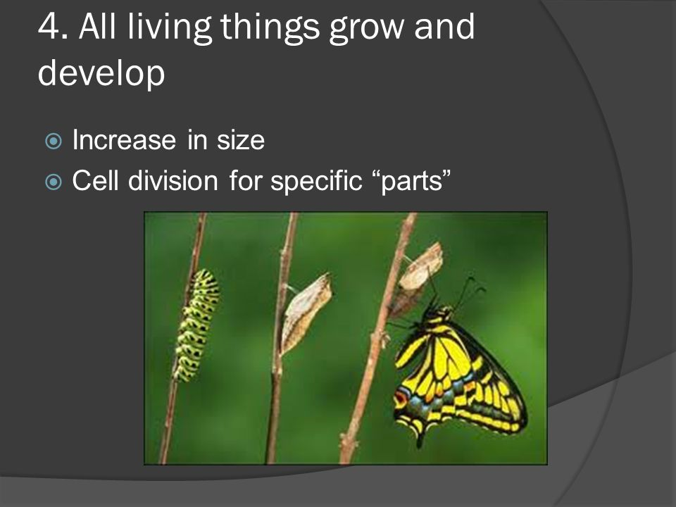 4. All living things grow and develop