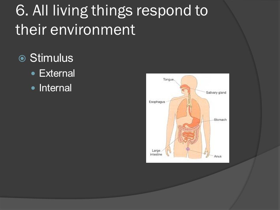 6. All living things respond to their environment