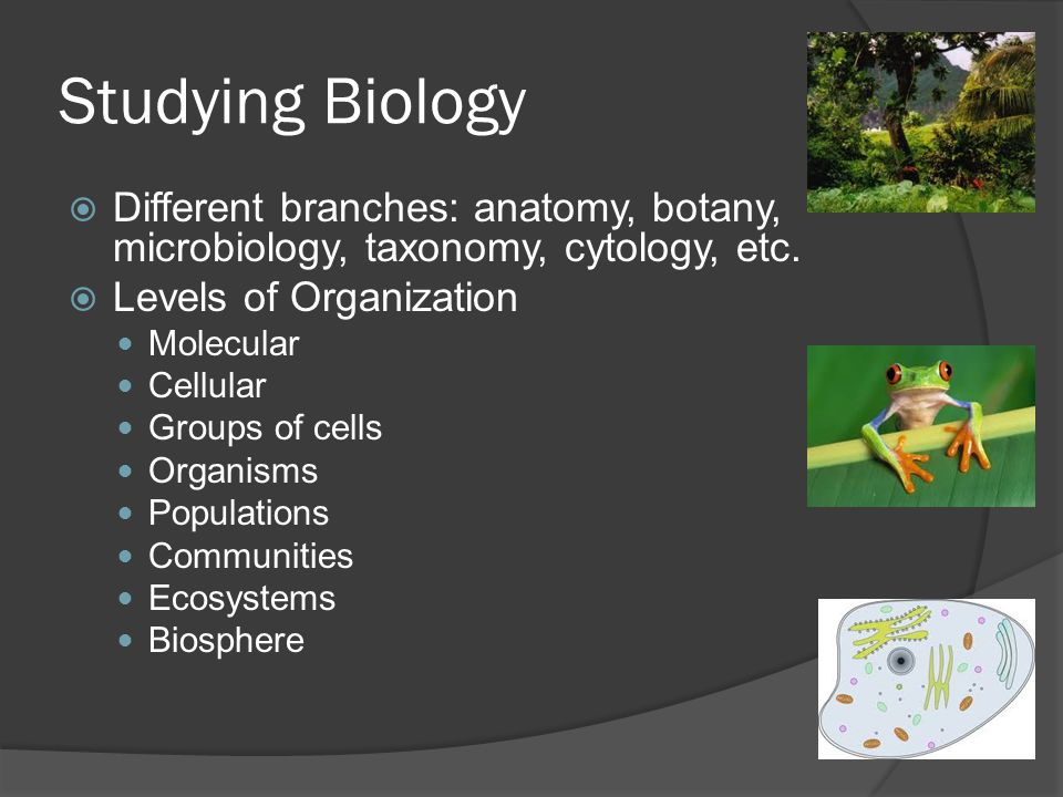 Studying Biology Different branches: anatomy, botany, microbiology, taxonomy, cytology, etc. Levels of Organization.