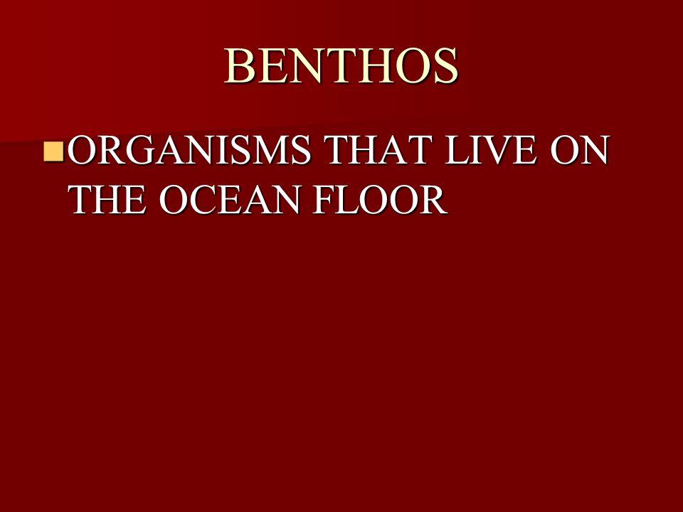 BENTHOS ORGANISMS THAT LIVE ON THE OCEAN FLOOR