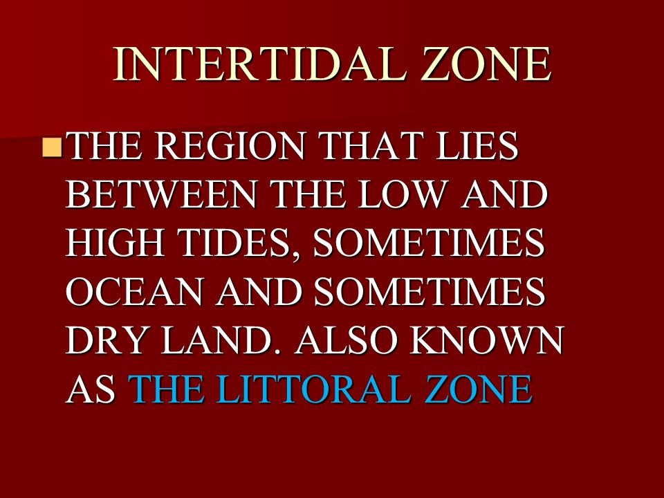 INTERTIDAL ZONE THE REGION THAT LIES BETWEEN THE LOW AND HIGH TIDES, SOMETIMES OCEAN AND SOMETIMES DRY LAND.