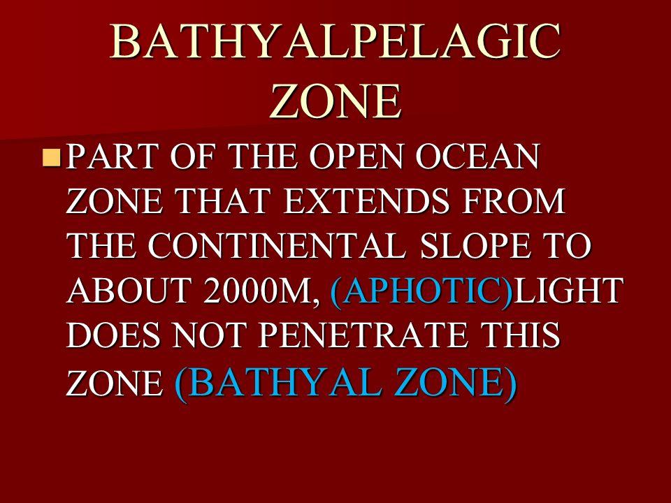 BATHYALPELAGIC ZONE