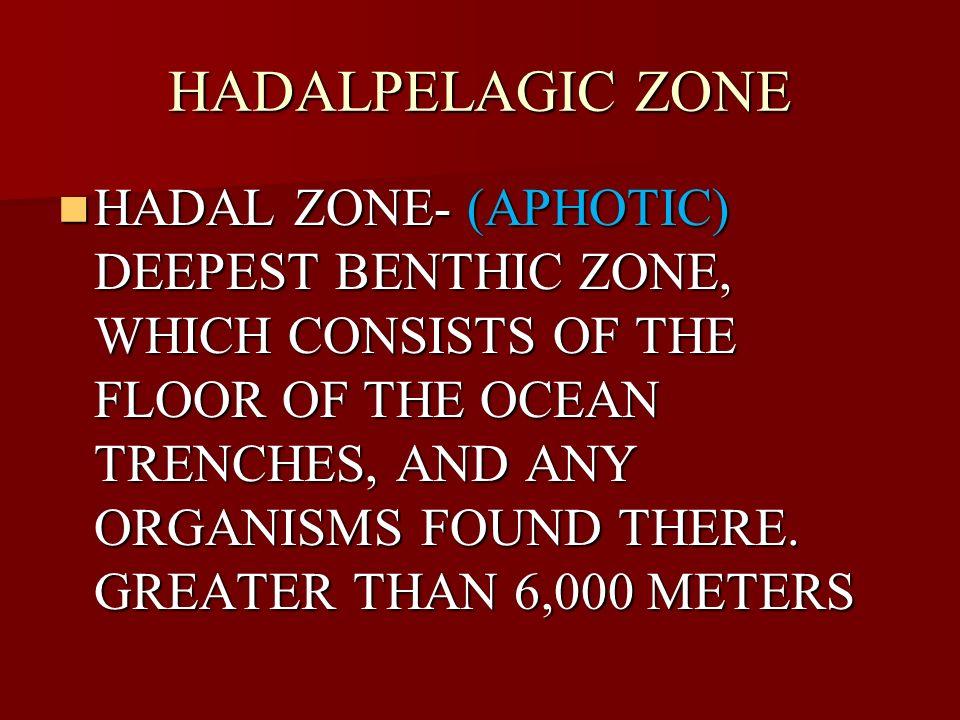 HADALPELAGIC ZONE