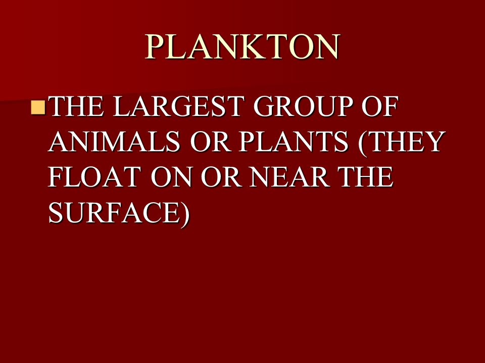 PLANKTON THE LARGEST GROUP OF ANIMALS OR PLANTS (THEY FLOAT ON OR NEAR THE SURFACE)