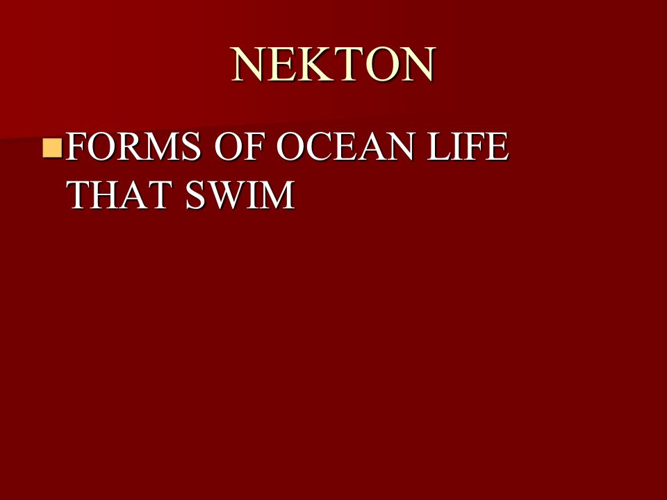 NEKTON FORMS OF OCEAN LIFE THAT SWIM