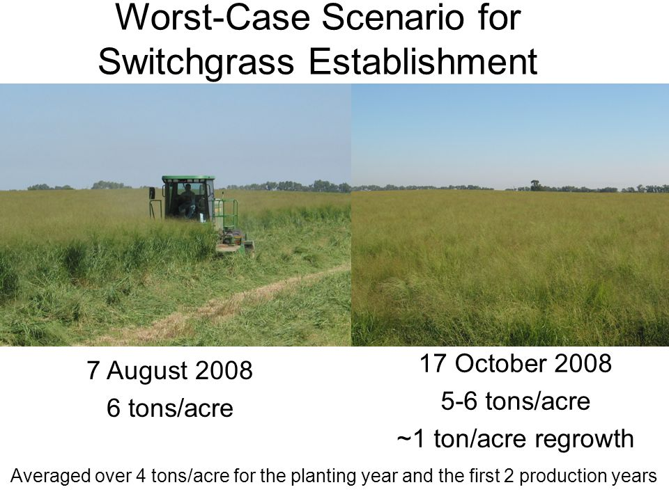 Worst-Case Scenario for Switchgrass Establishment