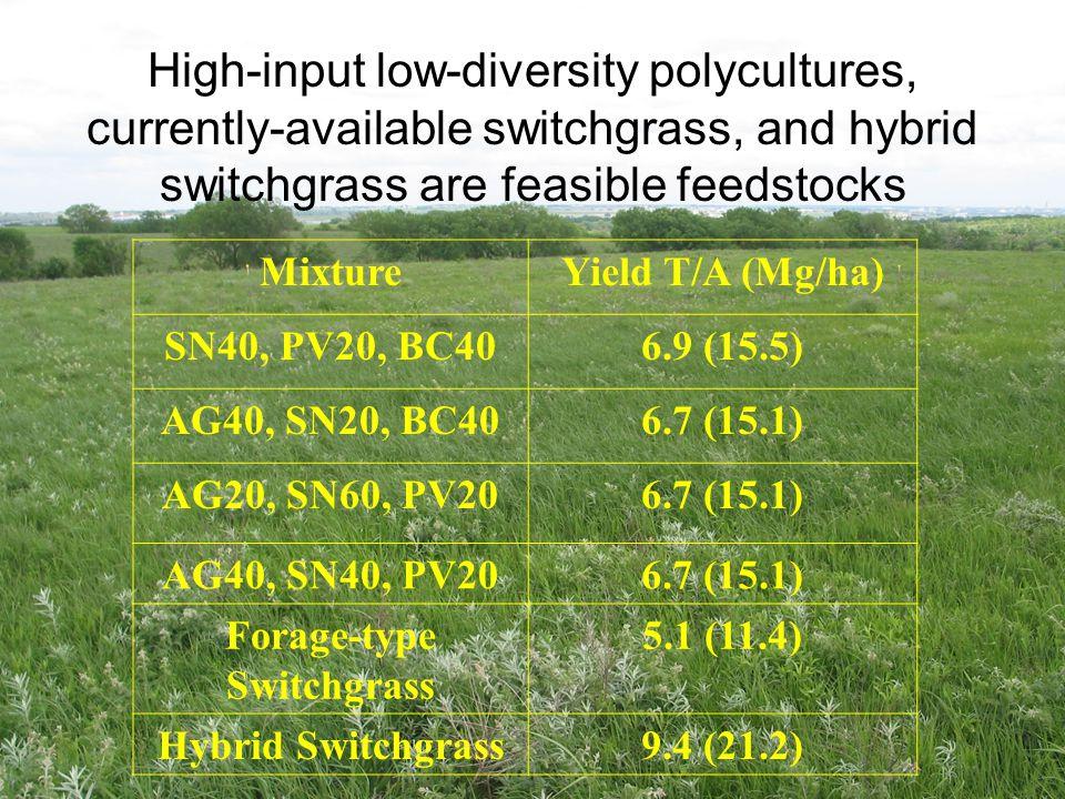 Forage-type Switchgrass