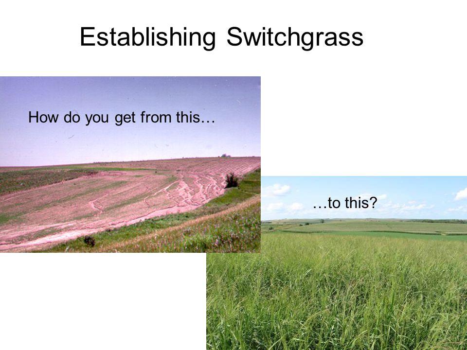 Establishing Switchgrass