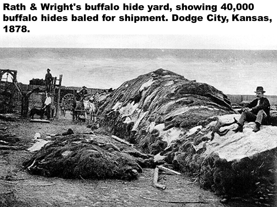 Rath & Wright s buffalo hide yard, showing 40,000 buffalo hides baled for shipment.