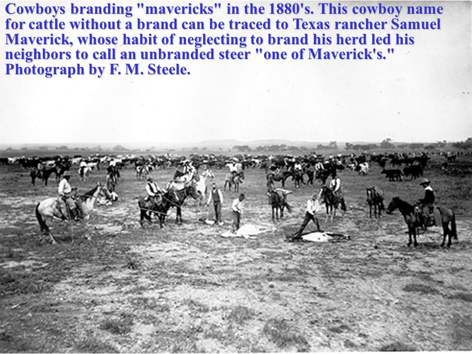 Cowboys branding mavericks in the 1880 s