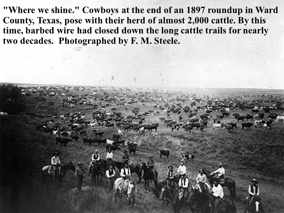 Where we shine. Cowboys at the end of an 1897 roundup in Ward County, Texas, pose with their herd of almost 2,000 cattle.