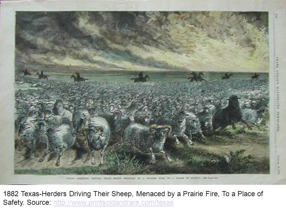 1882 Texas-Herders Driving Their Sheep, Menaced by a Prairie Fire, To a Place of Safety.