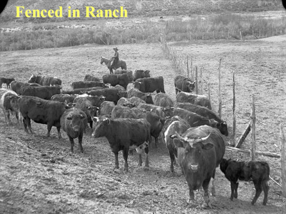Fenced in Ranch