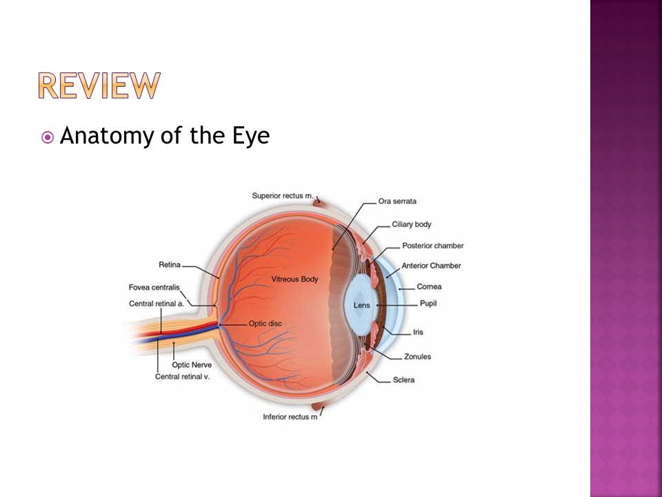 Review Anatomy of the Eye