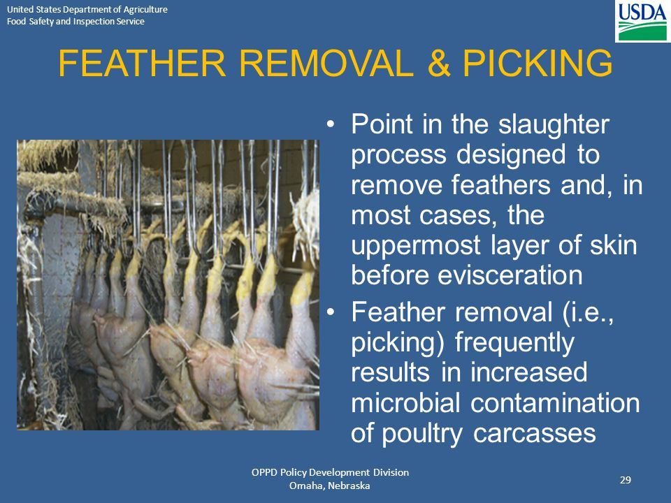 FEATHER REMOVAL & PICKING