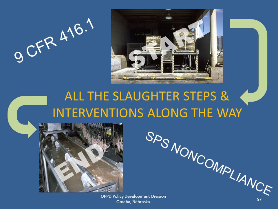 9 CFR 416.1 START. ALL THE SLAUGHTER STEPS & INTERVENTIONS ALONG THE WAY.