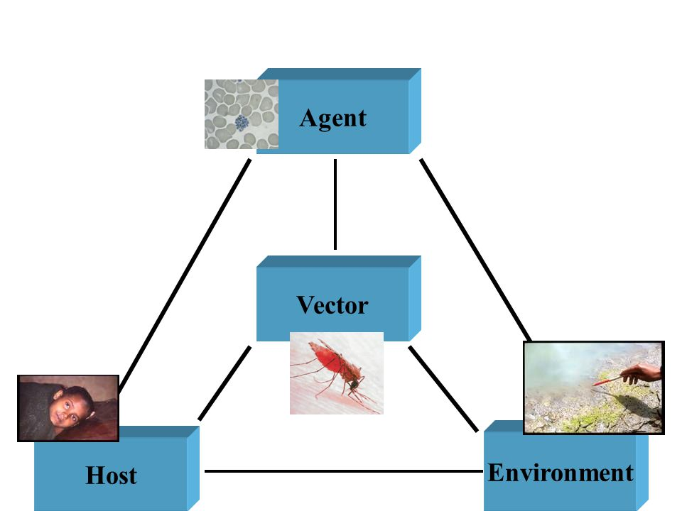 Factors involved in the Natural History of Disease