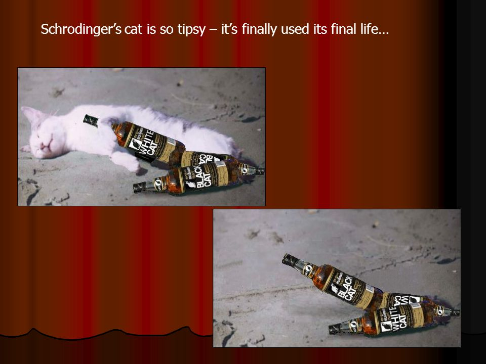 Schrodinger's cat is so tipsy – it's finally used its final life…