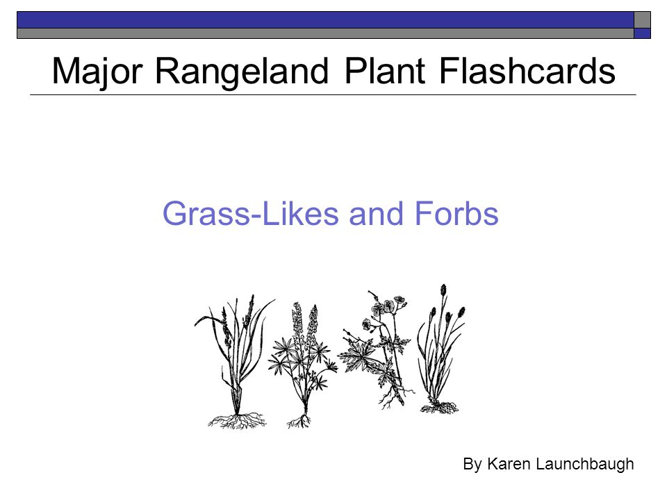 Major Rangeland Plant Flashcards