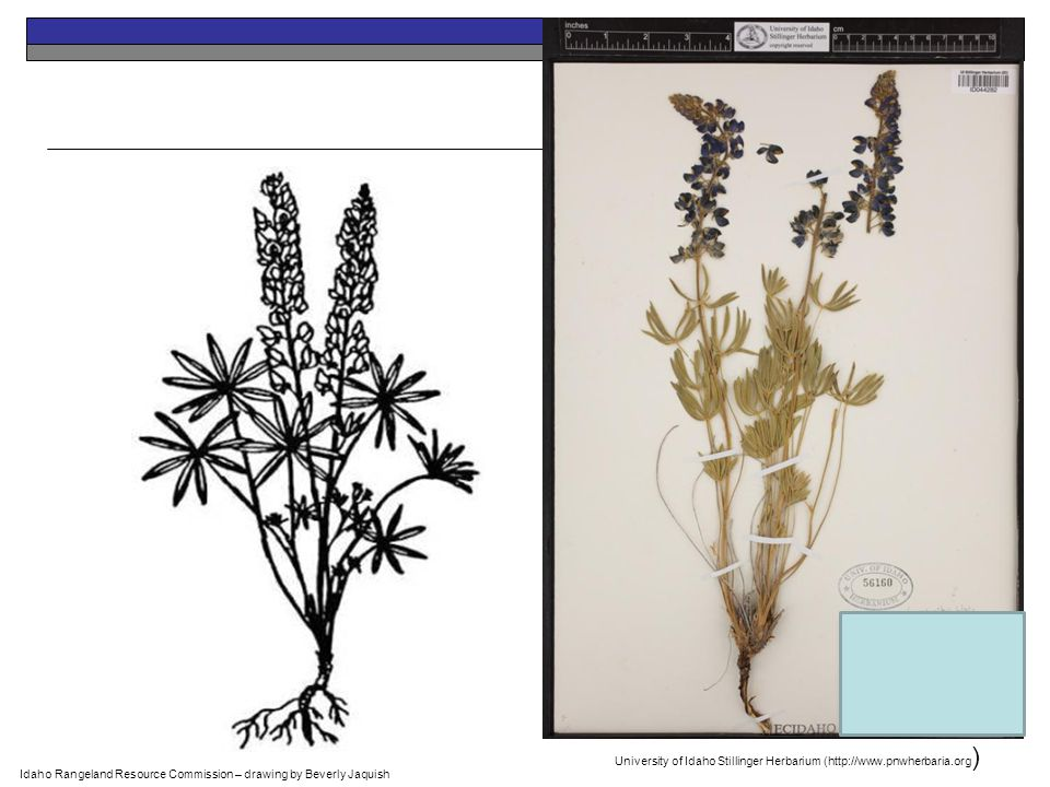 Range Plants -- OBJ 3: PPT