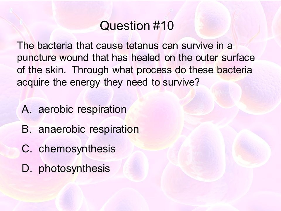 Question #10 aerobic respiration anaerobic respiration chemosynthesis
