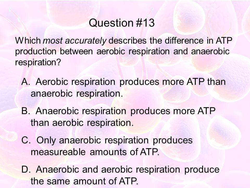 Question #13 Which most accurately describes the difference in ATP production between aerobic respiration and anaerobic respiration