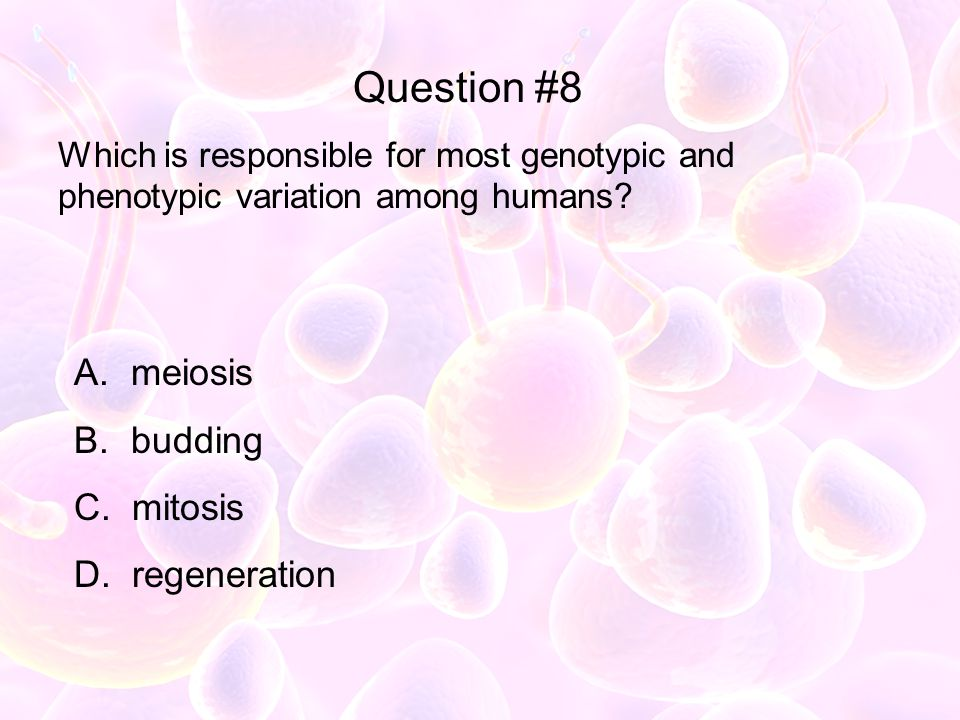 Question #8 meiosis budding mitosis regeneration
