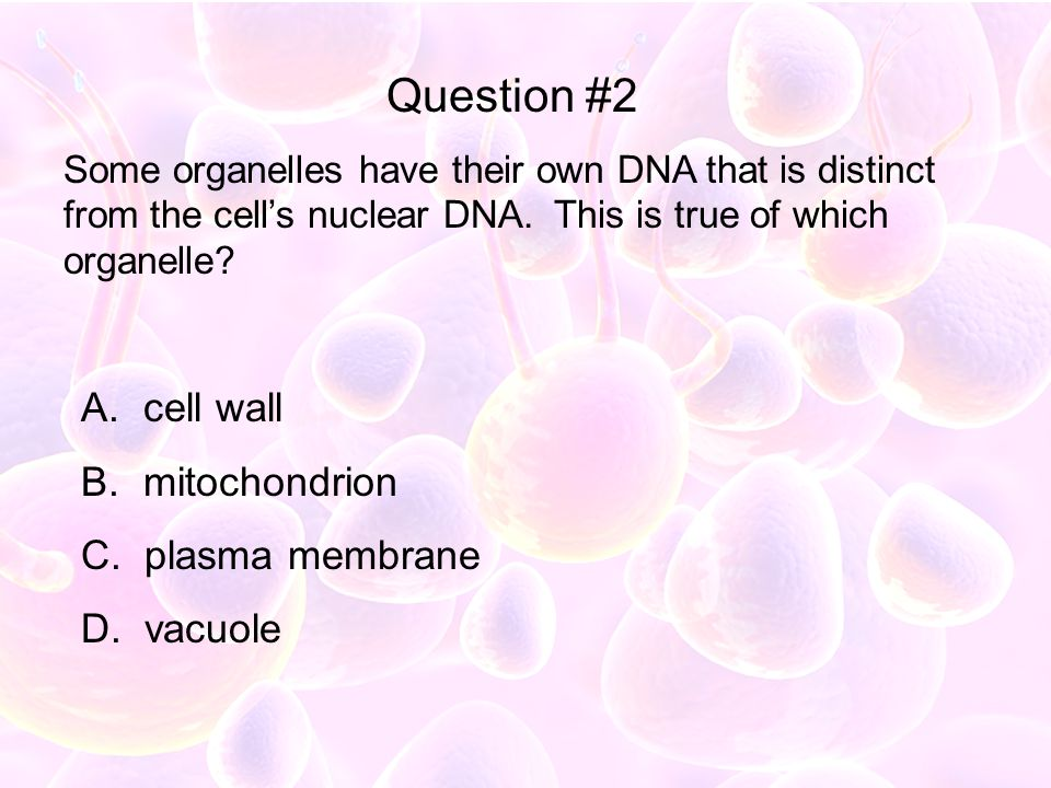 Question #2 cell wall mitochondrion plasma membrane vacuole