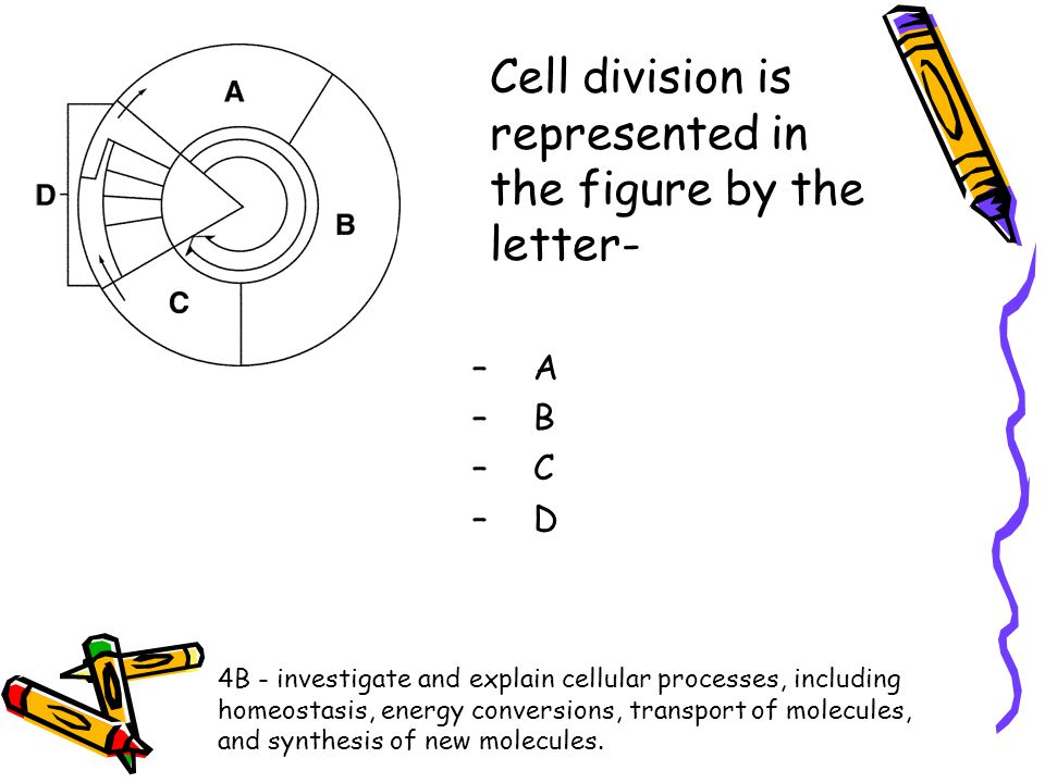 Cell division is represented in the figure by the letter-