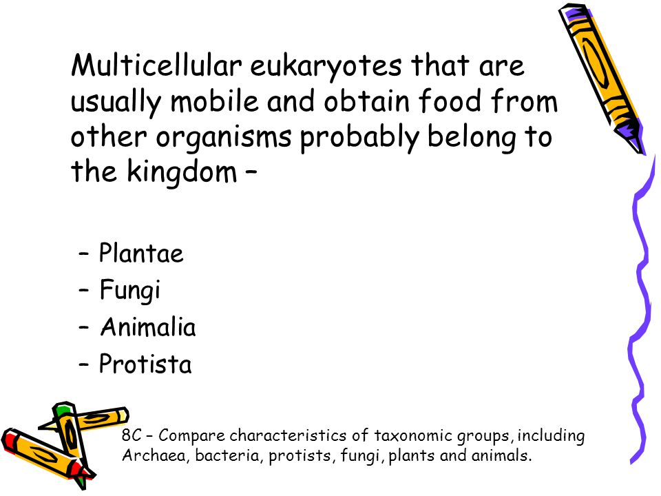 Multicellular eukaryotes that are usually mobile and obtain food from other organisms probably belong to the kingdom –