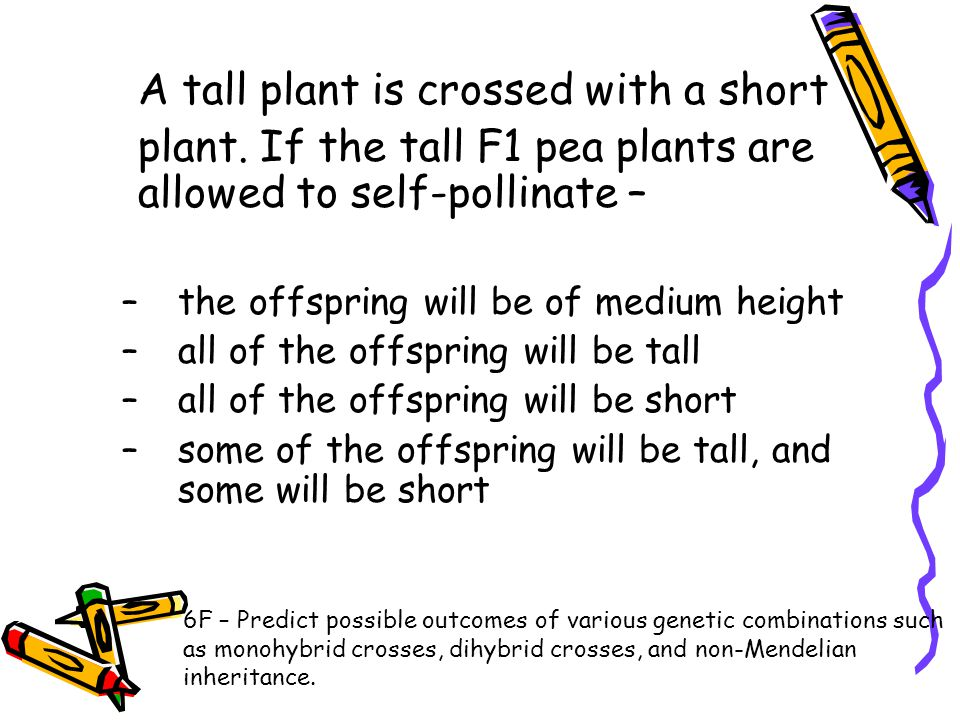 A tall plant is crossed with a short