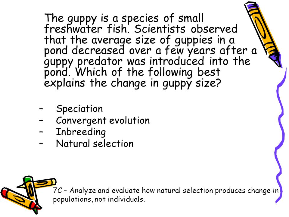 The guppy is a species of small freshwater fish