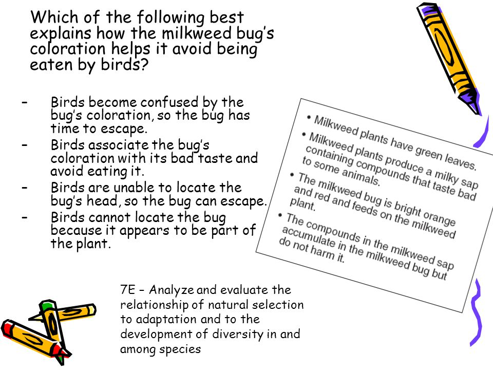 Which of the following best explains how the milkweed bug's coloration helps it avoid being eaten by birds