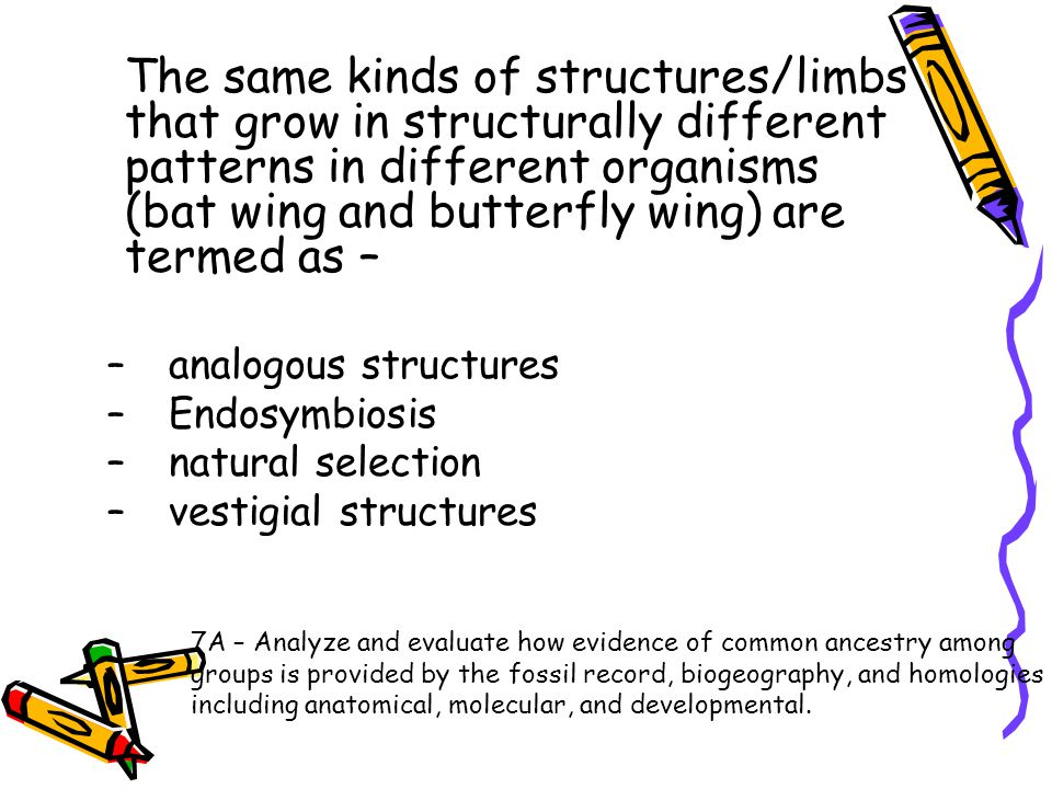 The same kinds of structures/limbs that grow in structurally different patterns in different organisms (bat wing and butterfly wing) are termed as –