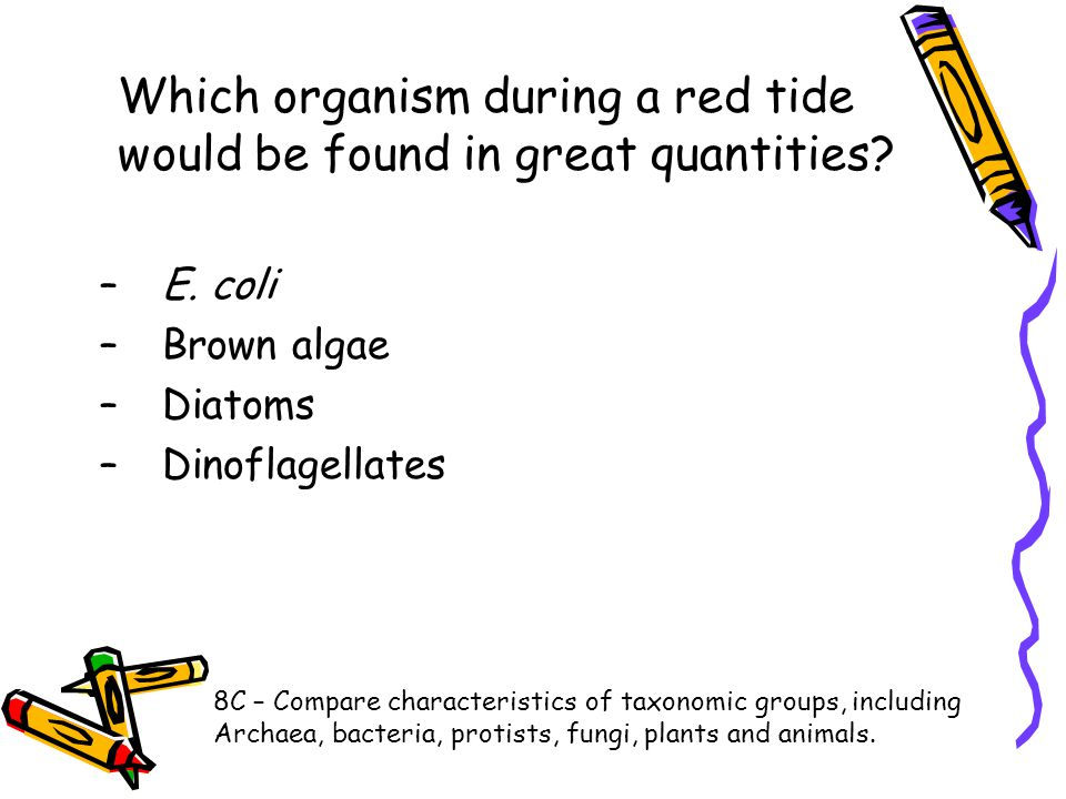 Which organism during a red tide would be found in great quantities