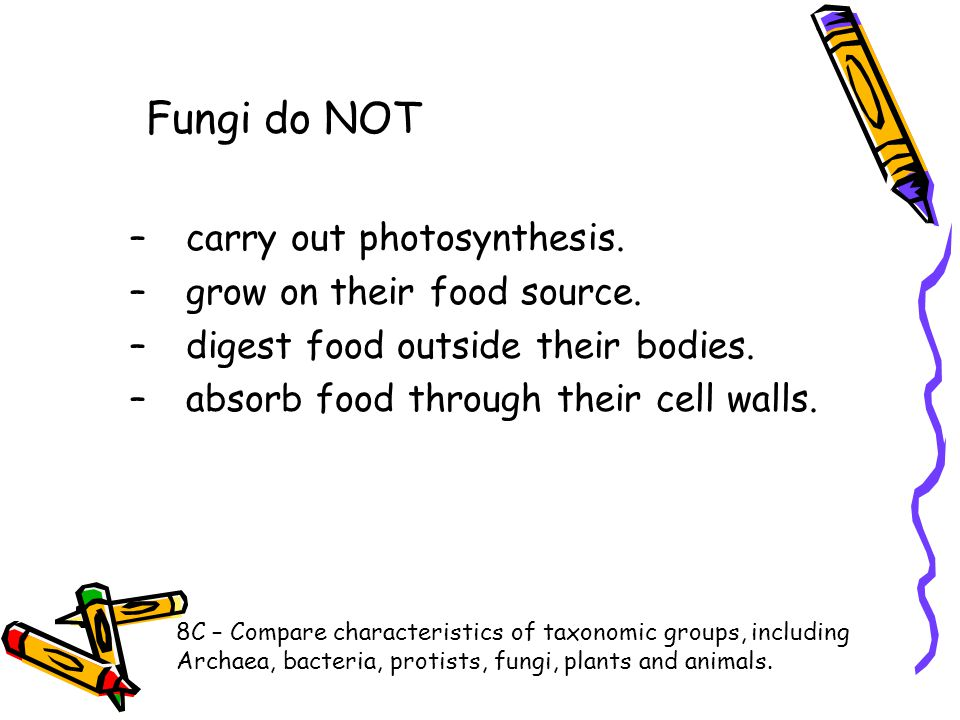 Fungi do NOT carry out photosynthesis. grow on their food source.