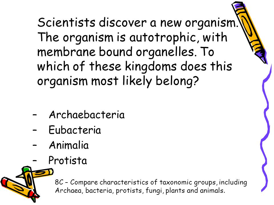 Scientists discover a new organism