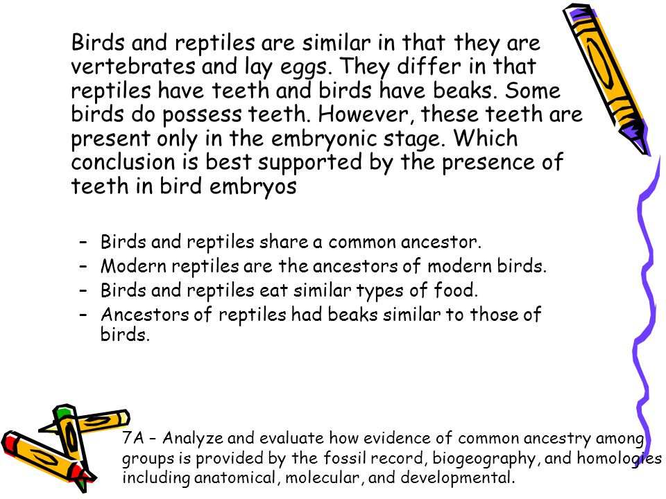 Birds and reptiles are similar in that they are vertebrates and lay eggs. They differ in that reptiles have teeth and birds have beaks. Some birds do possess teeth. However, these teeth are present only in the embryonic stage. Which conclusion is best supported by the presence of teeth in bird embryos