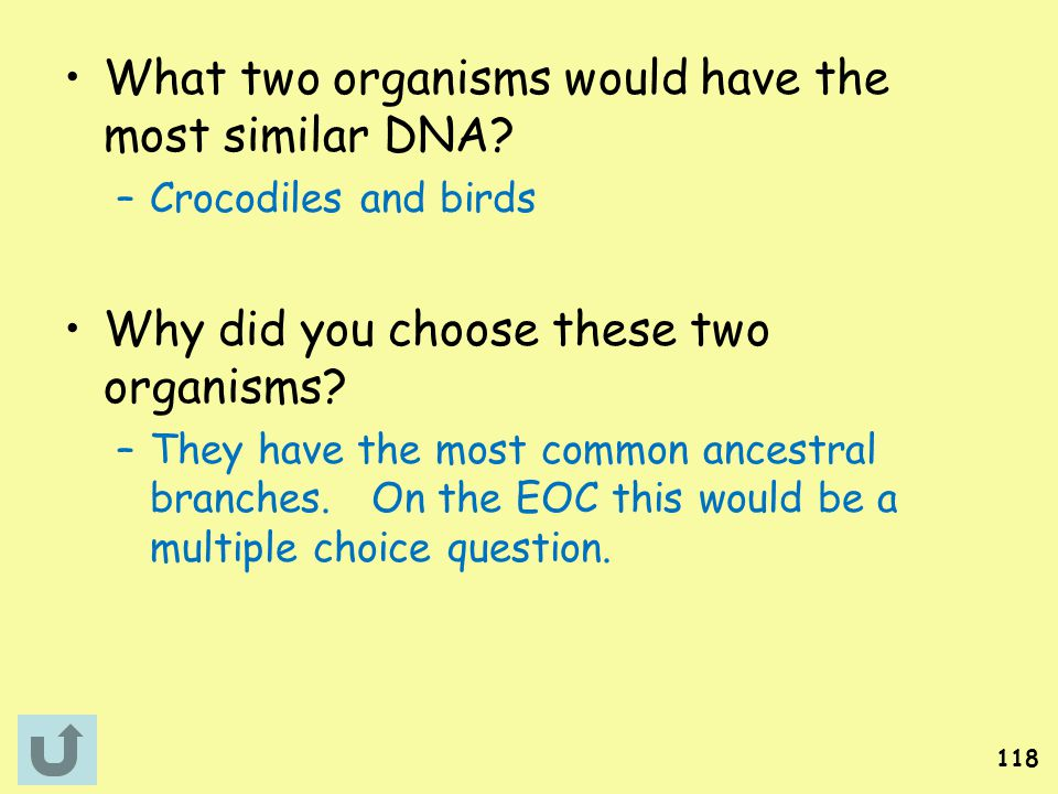 What two organisms would have the most similar DNA