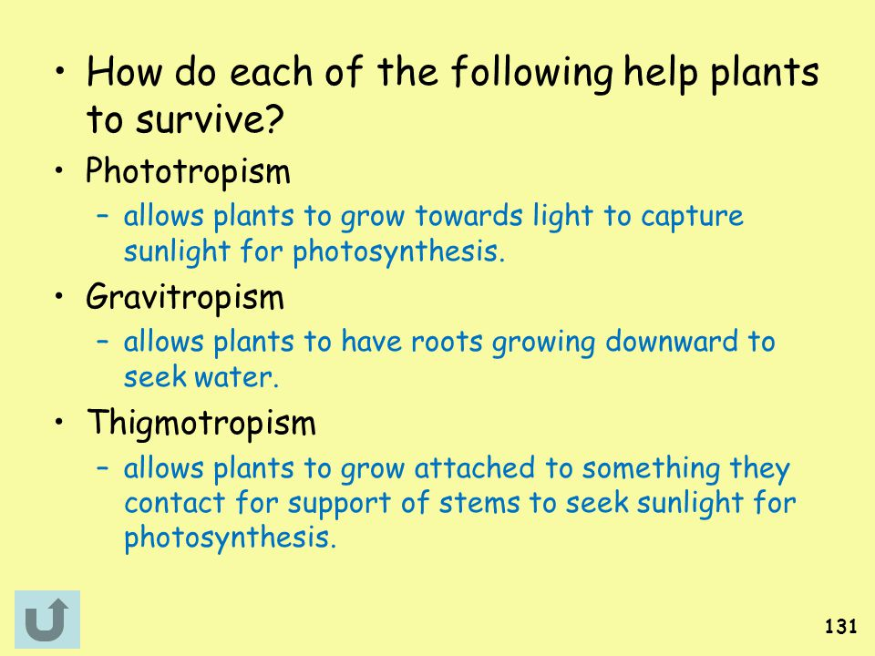 How do each of the following help plants to survive