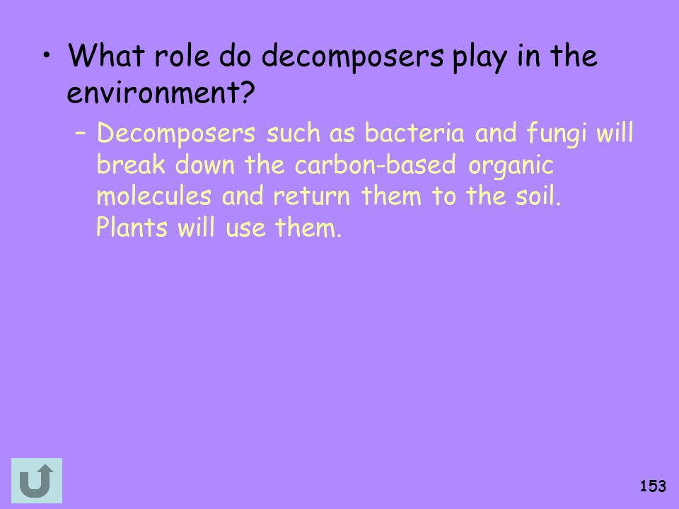 What role do decomposers play in the environment