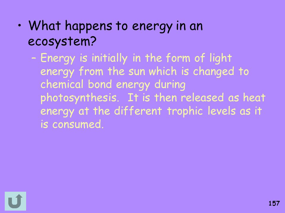 What happens to energy in an ecosystem
